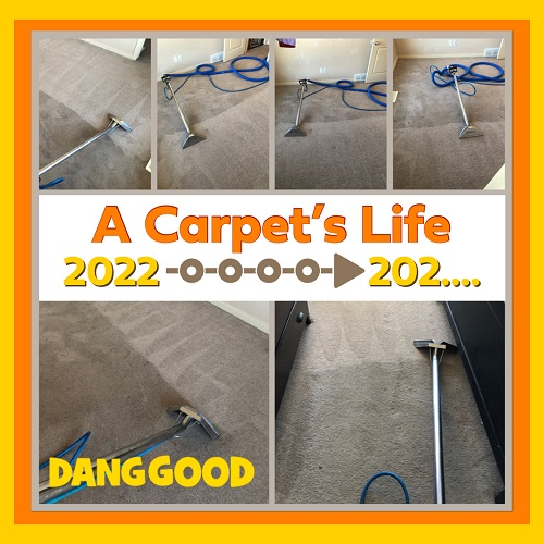 Extend the Lifespan of your carpet with regular Professional Carpet Cleaning